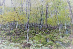 苔むした林