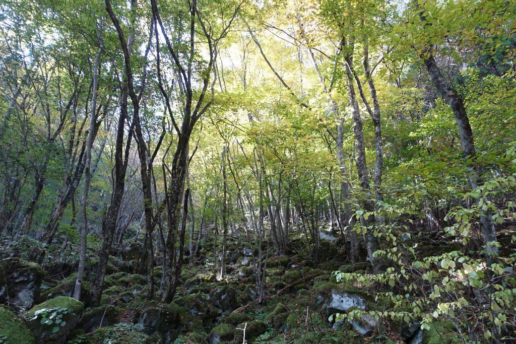 三重 大洞山 東海自然歩道石畳の道03