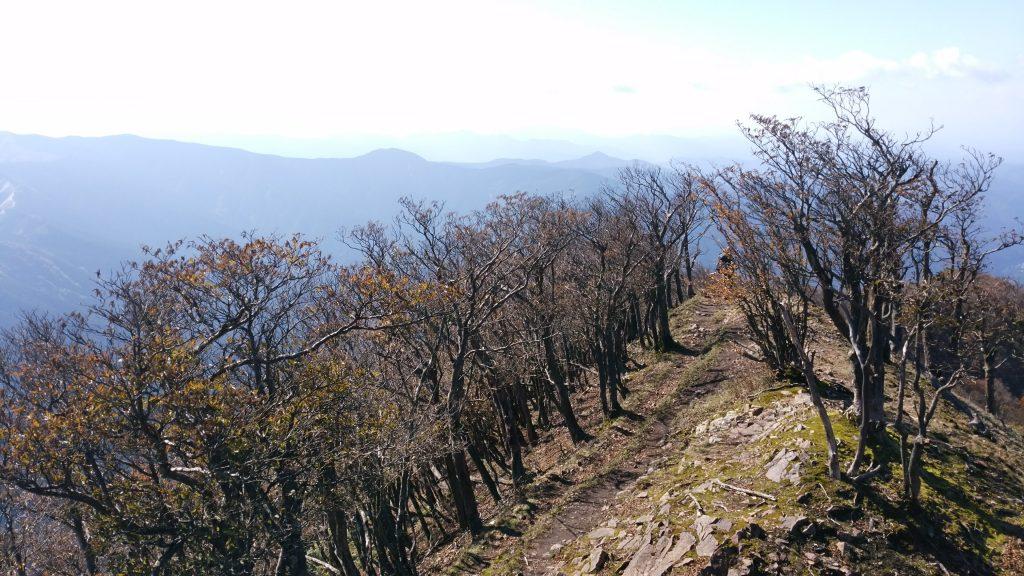 三重 高見山山頂 平野へ向かう登山道