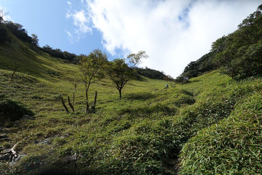 三重 入道ヶ岳 井戸谷コースの笹の登山道