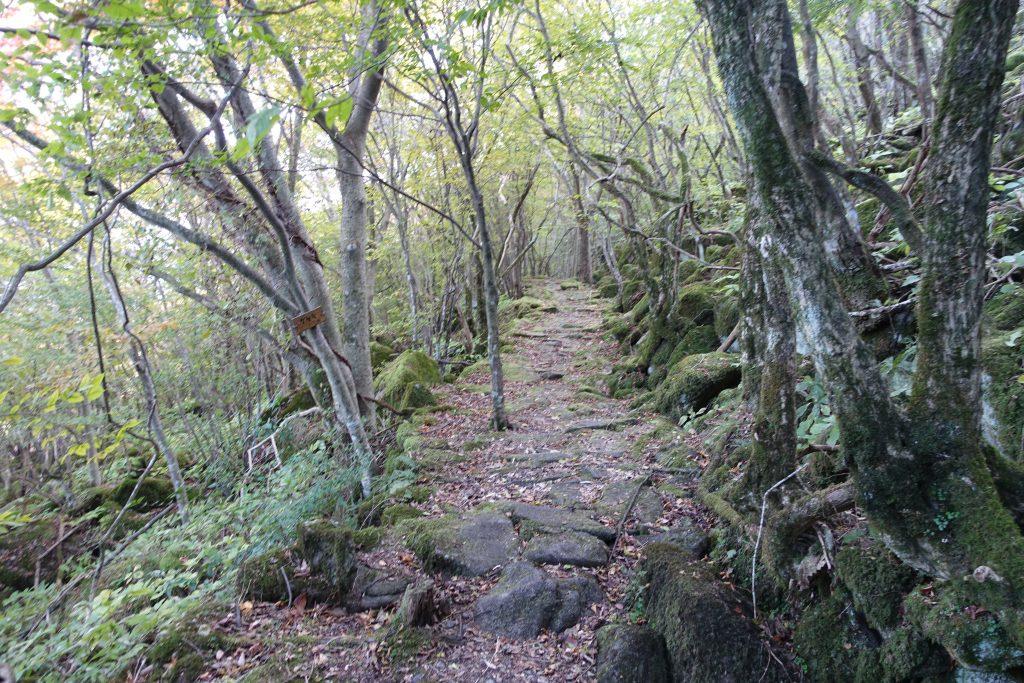 三重 大洞山 東海自然歩道石畳の道01