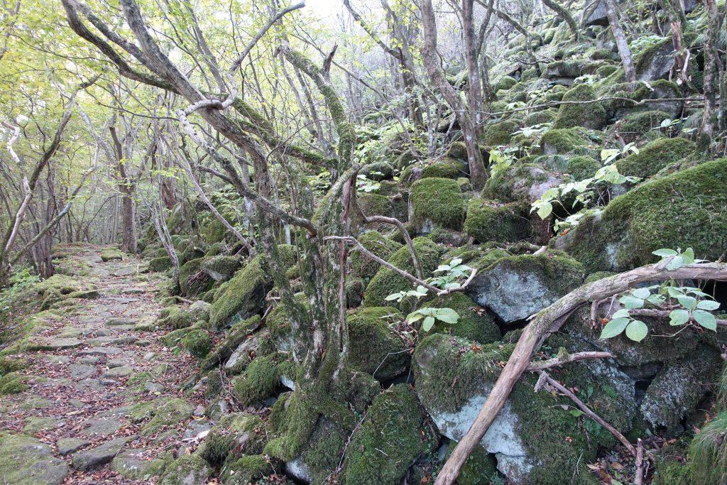 三重 大洞山 東海自然歩道石畳の道02