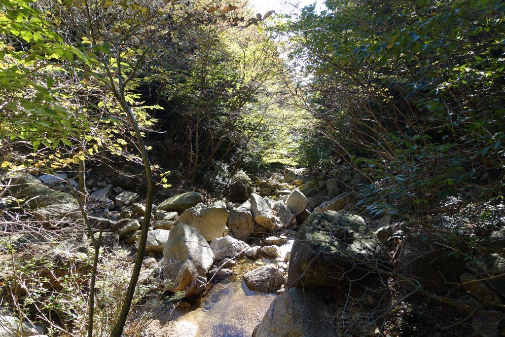 三重 仙ヶ岳 白谷道 上部