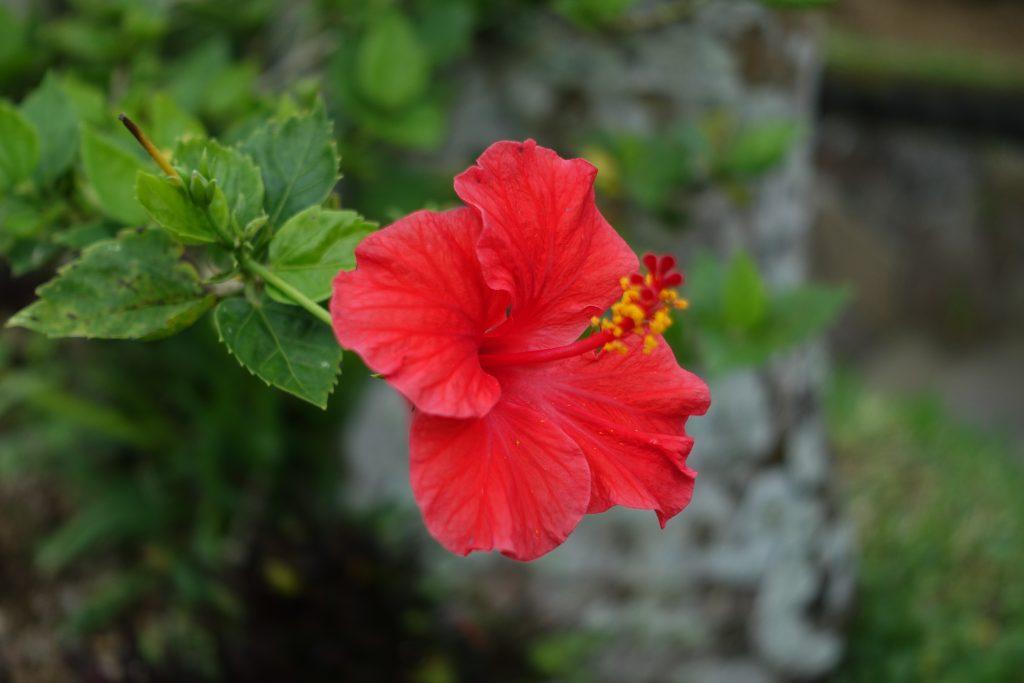 南国の花 RX100III