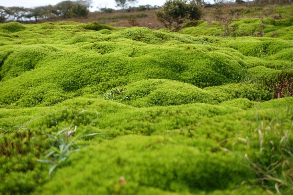 三重御池岳 苔の緑