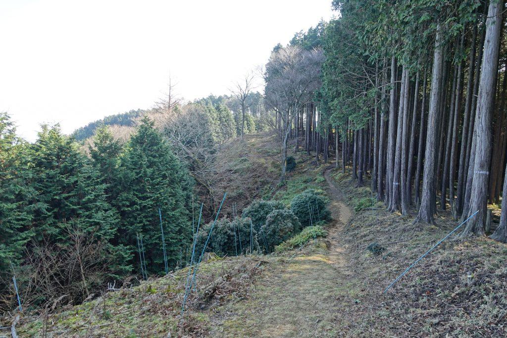 三重 経ヶ峰 笹子谷ルート分岐部から山頂への道を見る