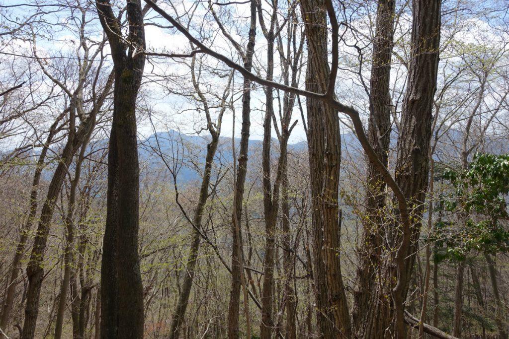 東京本仁田山 山頂付近の広葉樹林