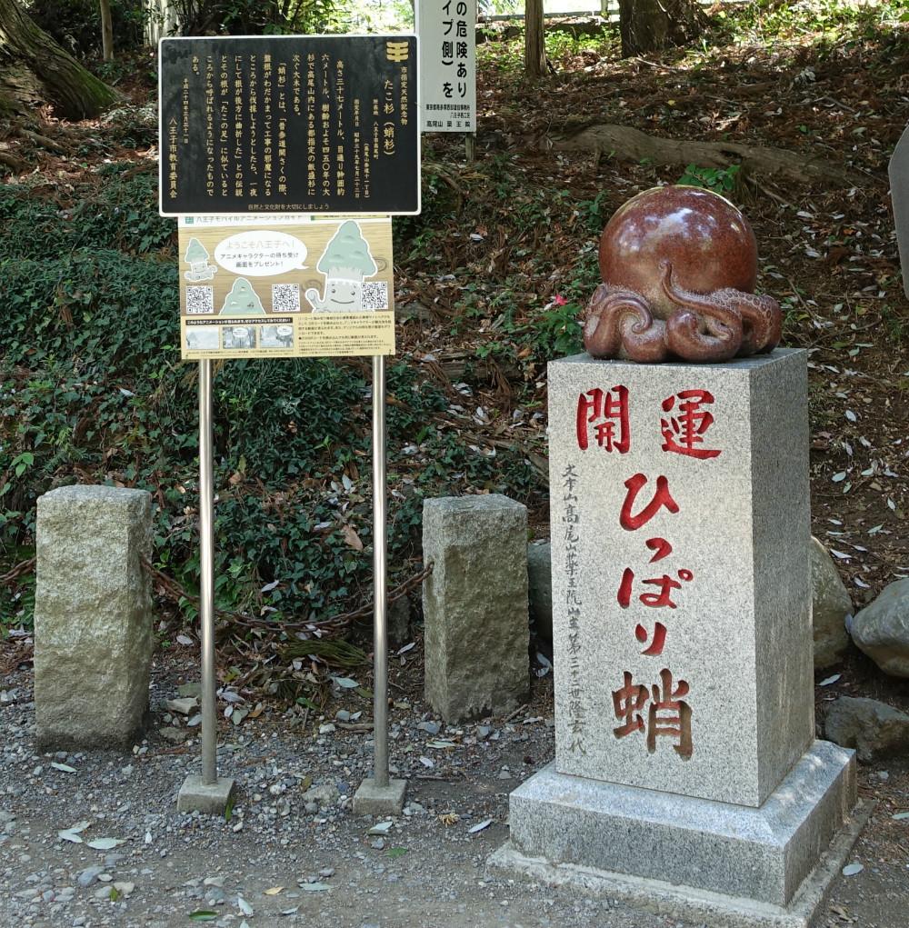 東京高尾山一号路 タコ杉
