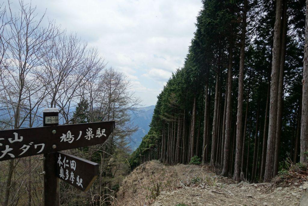 東京本仁田山 コブタカ山付近 川苔山への分岐道標