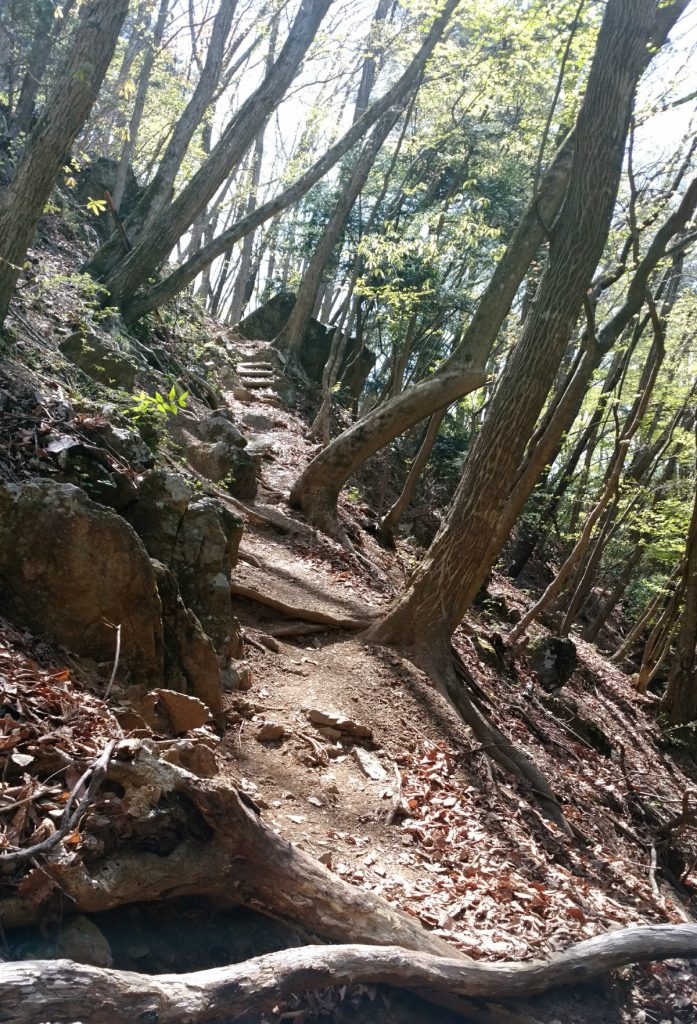 東京本仁田山 安寺沢ルート登り登山道