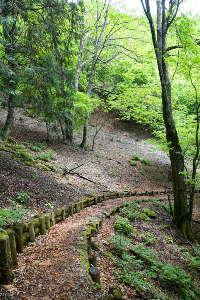 東京 六ツ石山登山 石尾根整備された道
