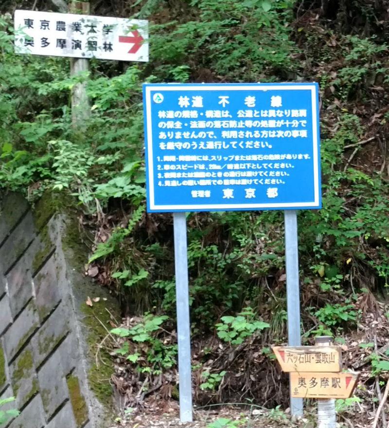東京 六ツ石山登山後 舗装された林道に到着