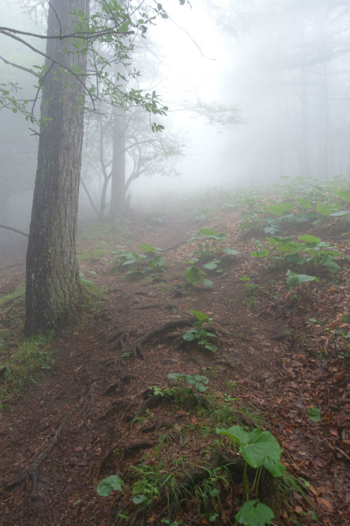 東京 六ツ石山登山 石尾根から六つ石山へ至る最後の坂 霧で視界不良