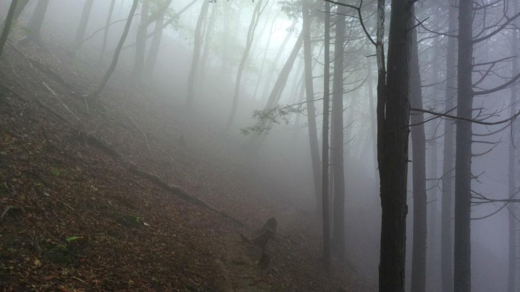 東京 六ツ石山登山後 下山 霧の道