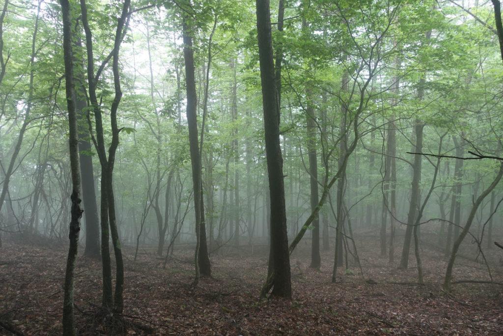 東京 六ツ石山登山 5月 石尾根 六ツ石山分岐近く 霧が発生
