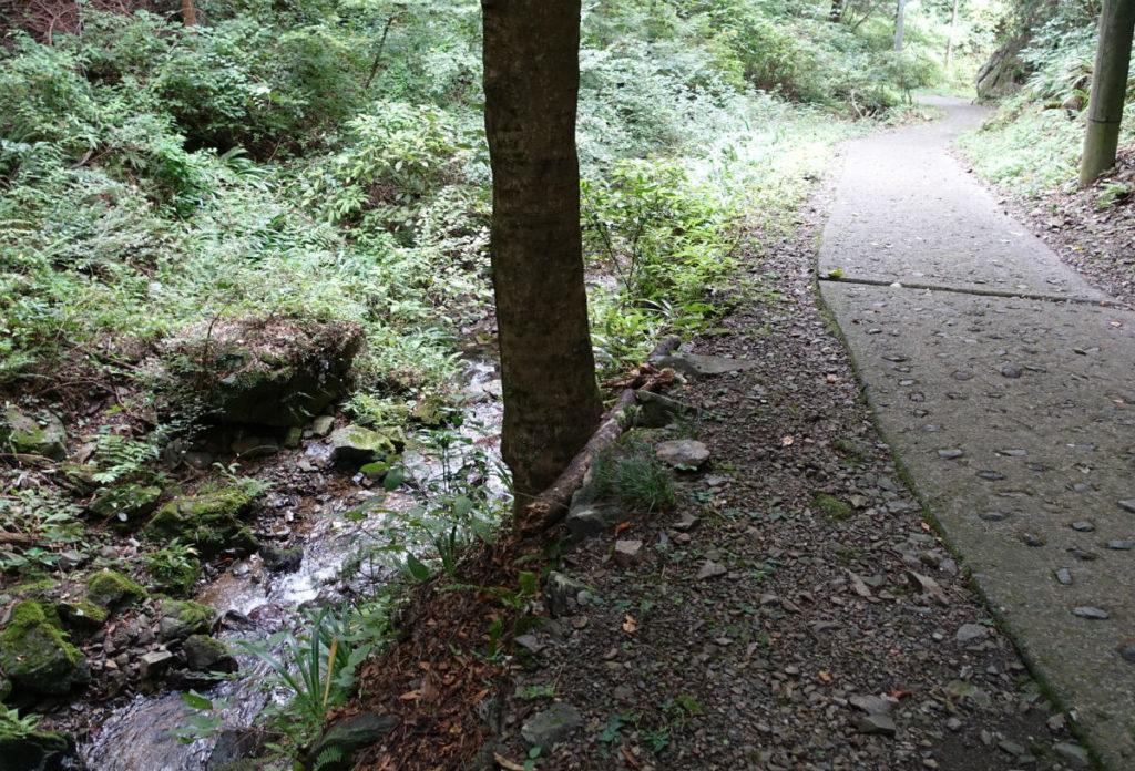 初秋高尾山39 蛇滝からの沢に沿って道を下る