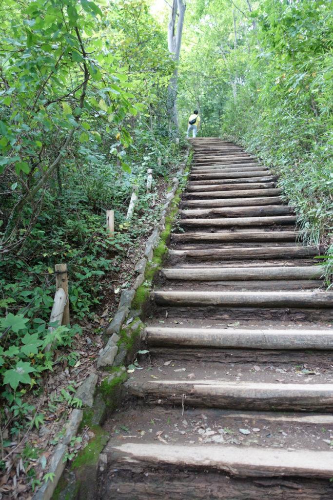 初秋高尾山14 稲荷山ルート 山頂直前の階段