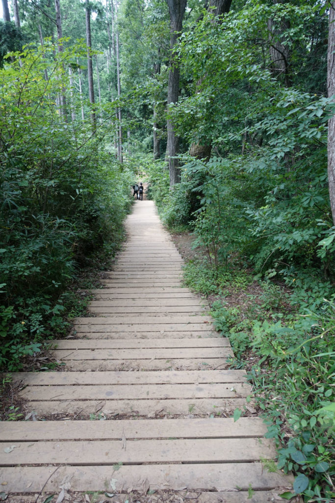 初秋高尾山11 稲荷山ルート 下りの階段もあり