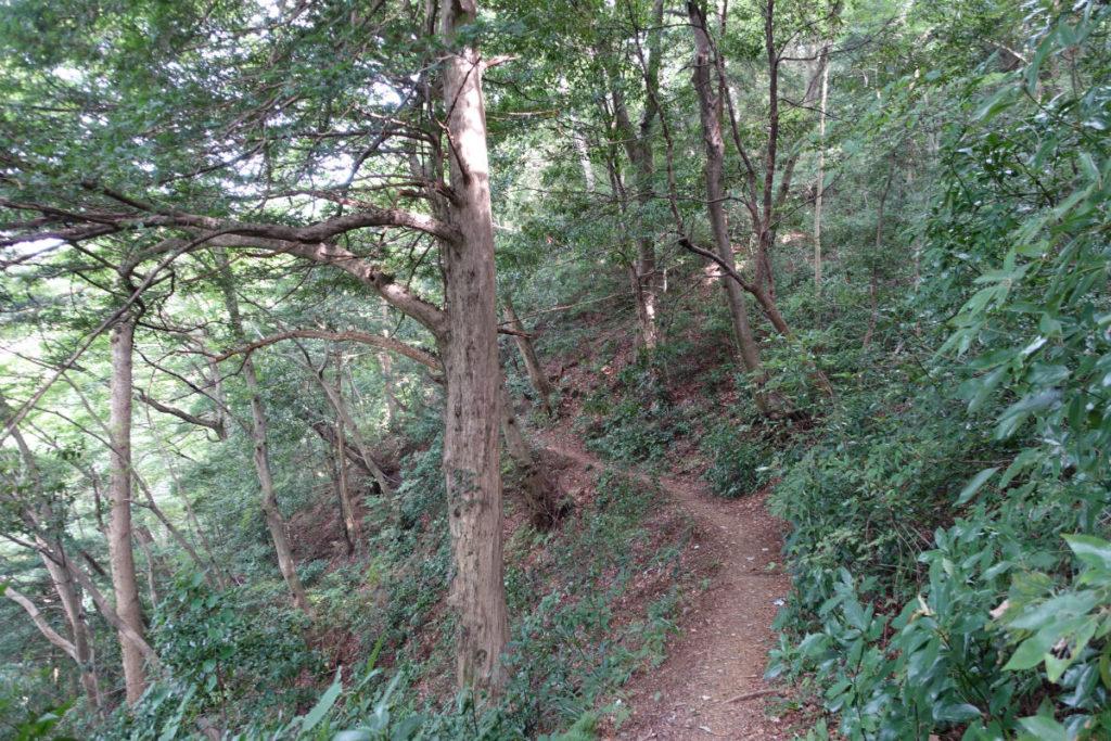 初秋高尾山29 2号路登山道